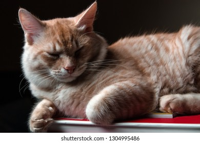 Cat white and red marble color sleeping on books against a dark background close-up upperbody macro