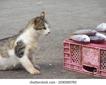 Cat who wants to eat some fish