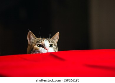 Cat with wild eyes ready to attack in ambush.