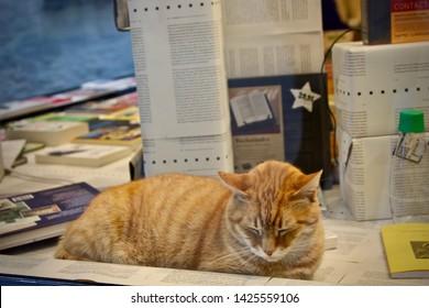 Cat in the window of a bookstore in Mechelen.