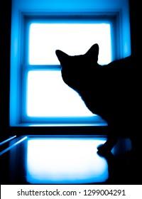 Cat in Window Silhouette Neon Light Glow