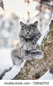 Cat in winter forest. Adventure fluffy pet