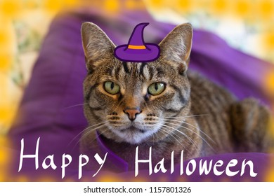 A cat with a witch hat with Happy Halloween handwriting. Conceptual image for Halloween,