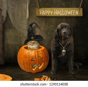The cat in a witch hat is inside a pumpkin. His dog is next to it. Happy Halloween.