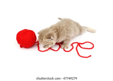 cat and wool