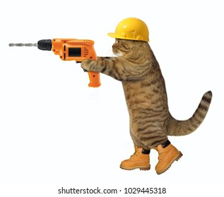The cat worker holds an electric drill . White background.