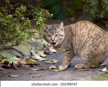 Cat to yawn