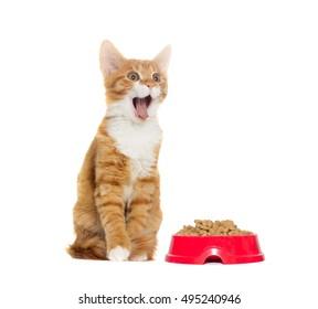 cat yelling on white background