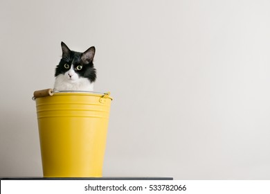 cat yellow bucket