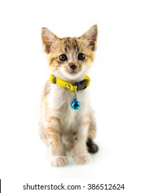 Cat with yellow collar on isolated background