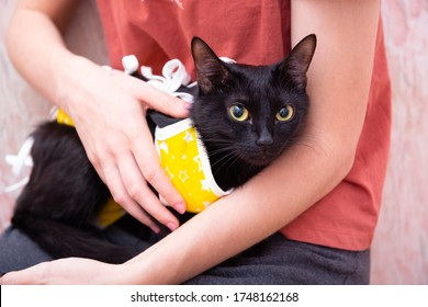 Cat in yellow medical blanket for cats, black cat looks into the camera. Treatment of a pet after surgery, sterilization, spay. The girl supports the cat, strokes