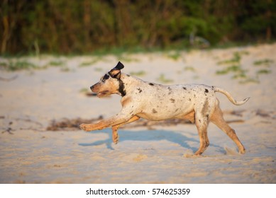 Leopard Running Stock Photos, Images & Photography | Shutterstock