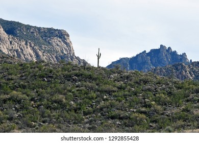 Catalina State Park near Tucson, Arizona