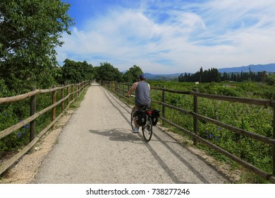 CATALONIA, SPAIN – JUNE 9, 2016: A cyclist bicycles the Via Verde trail through fields and groves in Catalonia, Spain.