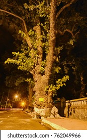 Catappa trees at night on Con Dao Island