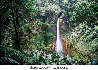 Catarata del Toro, Rain Forest, Costa Rica
