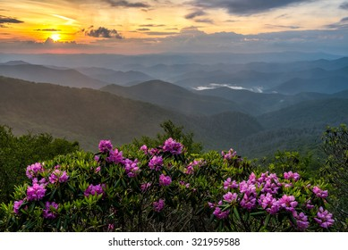 Catawba Rhododendron take center stage to this misty scene along the Blue Ridge Parkway in north Carolina.