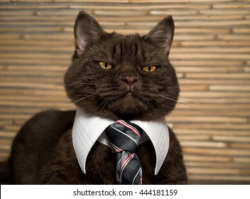 Cat-boss in tie