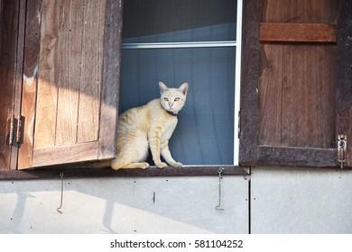 Cat/Cat Island window