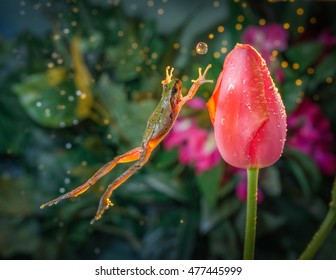 Catch the Ball - Frog jumps toward a tulip in time as if to catch the water ball