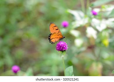 Catch butterflies on flowers