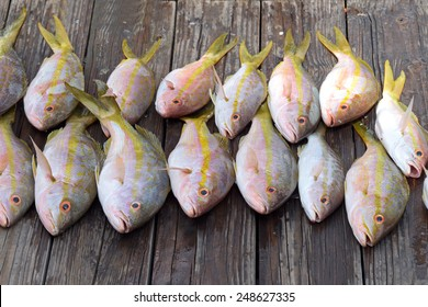 Catch of the day on the dock--Yellowtail Snapper