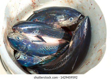 Catching Tuna Fish Stock Photos, Images & Photography