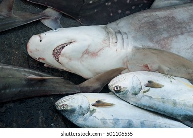 The catch of fishermen in Oman on the shore of the Indian ocean with a shark killed
