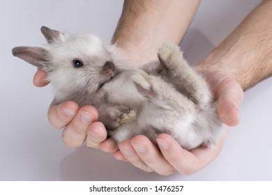 catch rabbit