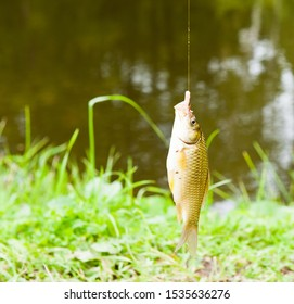catched fish on a hook with a worm against water background