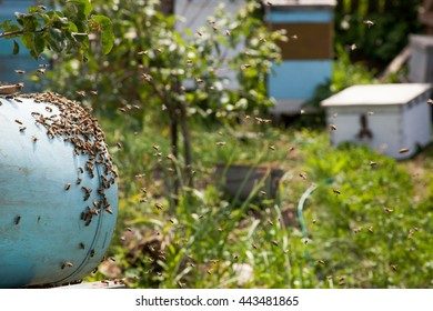 catching bees