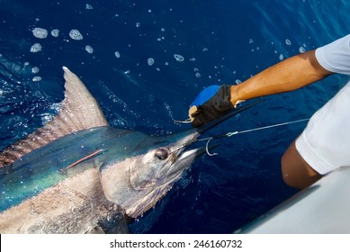 Catching marlin big game sport fishing