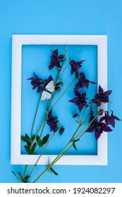 catchment, peony, garden flower, white frame, blue background, garden pink catchment flower on blue background with butterfly