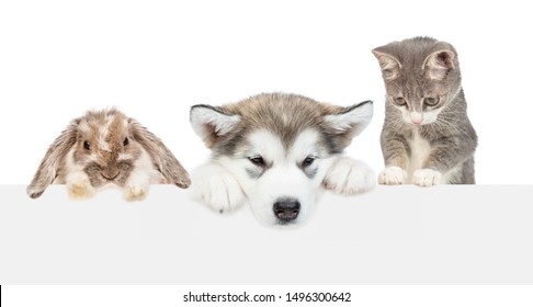 Cat,dog and rabbit above empty white banner lookning down. isolated on white background. Empty space for text