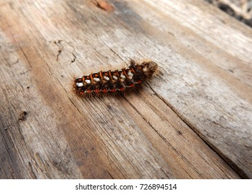 Caterpillar on board of wood