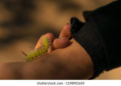 Caterpillar on a hand