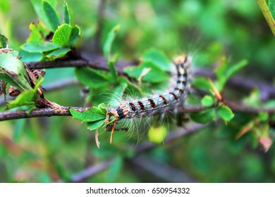 Caterpillar on the leaf.