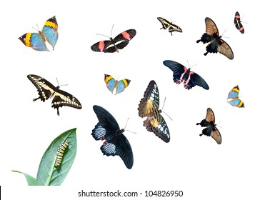 Caterpillar on the leaf, and a group of different butterflies isolated on white background