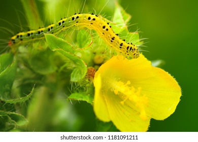 Caterpillar with yellow flowers on natural backdrop
