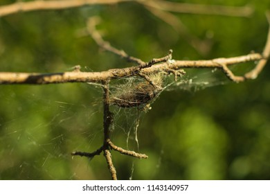 Cobweb On Stick Stock Photo Edit Now 1170947458 Shutterstock