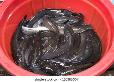Catfishes in the basin in the market,Thailand