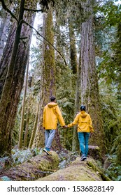 Cathedral Grove park Vancouver Island Canada with huge douglas trees and people in yellow rain jacket