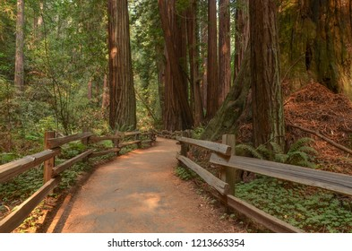 Cathedral Grove of redwood trees at Muir Woods National Monument, California