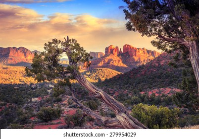 Cathedral Rock in Sedona, Arizona in the evening light with an old tree in the foreground