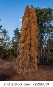 A cathedral termite mound in Australian outback