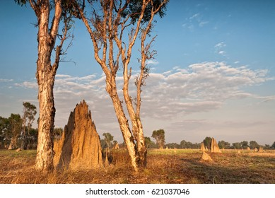 Cathedral termite mounds (Nasutitermes triodae), Northern Territory, Australia