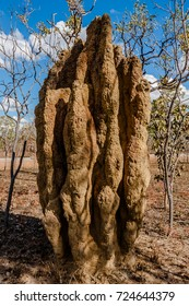 Cathedral termite mounds, Northern Territory, Australia