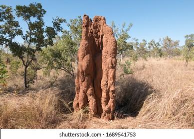 Cathedral termite (Nasutitermes triodiae) mound, Northern Territory, Australia