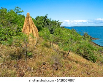 Cathedral termite nest / mound, nature on Mt Adolphus Island, Torres Strait, Cape York, Australia, turquoise blue water of the Strait in background.