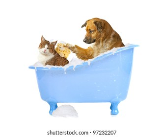 Cat-lick, dog and cat in a bathtub